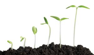 a seedling growing